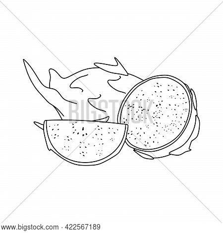 Illustration Vector Of Dragon Fruit. Dragon Fruit Icon Isolated On White Background. Dragon Fruit Sy