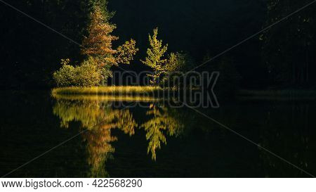 Symmetric Nature Scenery With Backlit Trees Growing On A Riverside