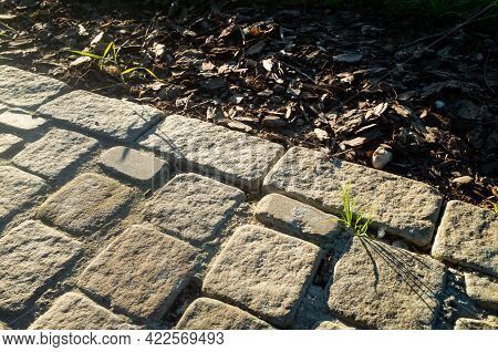 Cobblestone Road In The Park. A Sprout Of Grass Grows Between The Stones.