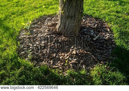The Roots Are Sprinkled With Pine Bark To Keep Them Warm. Pieces Of Pine Bark Are Carpeted On The Su