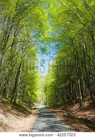 springy view of forest road and green forest