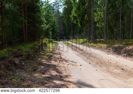 Spring Forest Road Sunlight View. Road In Autumn,spring,summer Wood. Spring Forest Road. Road In The