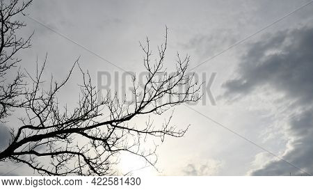 Autumn Cloudscape With Bare Branches Of Dead Tree. Silhouettes Of Tree Branches Withot Leaves Agains