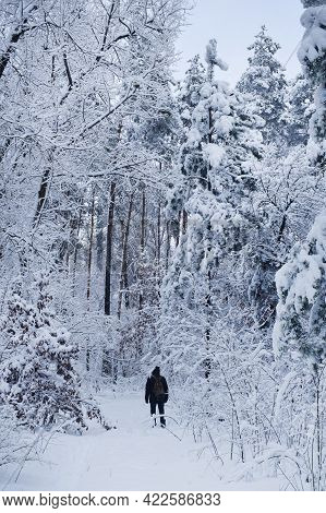 A Man With A Backpack Carries Out A Hike In The Winter In The Mountains. Forest In The Mountains Aft