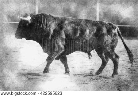 Blood, spectacle of bullfighting, where a bull fighting a bullfighter Spanish tradition black and white drawing