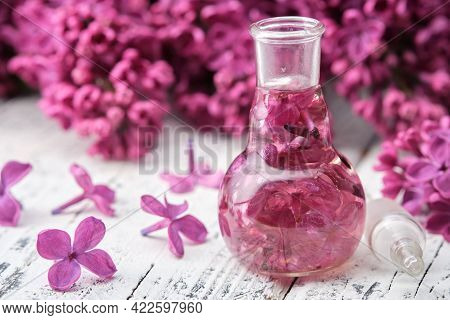 Lilac Essential Oil Or Infusion Bottle. Syringa Extract. Blossom Lilac Flower On Background.