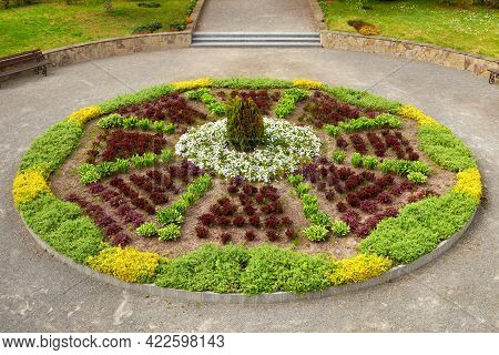 Garden Or Park Flowerbed With Deciduous Shrubs And Green Perennial Plants For Landscaping.