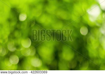 Blurred Bokeh Background Image Of Bright Green Foliage In Spring Or Summer.