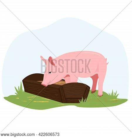 On A Farm, A Piglet Eats Hay From A Trough. Country Pet. Pig Character Isolated On White Background.