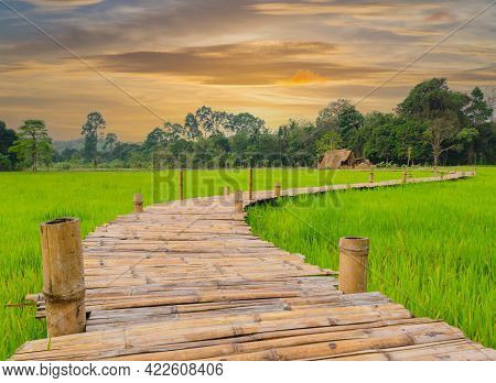 Wooden Bridge Amidst Paddy Fields With The Farmer's Straw House With Sun Set.