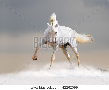 The white horse in the snow