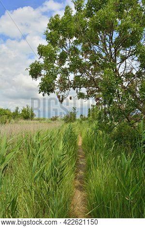 A Small Footpath In The Wetlands Of Isola Della Cona In Friuli-venezia Giulia, North East Italy