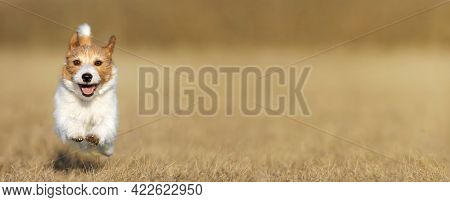 Playful Happy Smiling Dog Puppy Running, Jumping In The Grass. Summer Pet Care Banner.