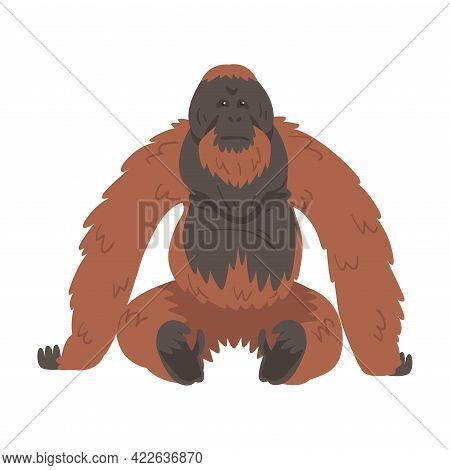 Orangutan Monkey As Arboreal Great Ape With Long Arms Vector Illustration