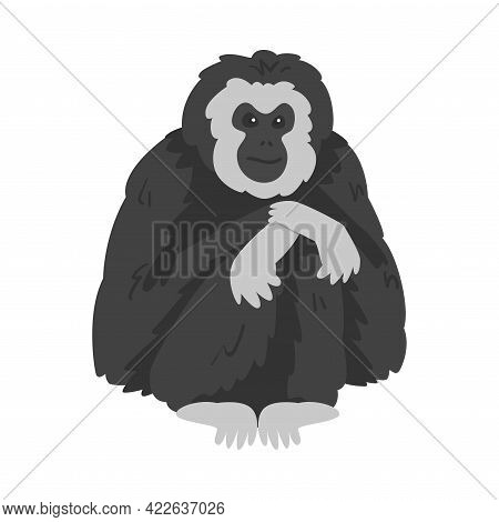 Pileated Gibbon Monkey As Ape With Black Shaggy Fur Vector Illustration