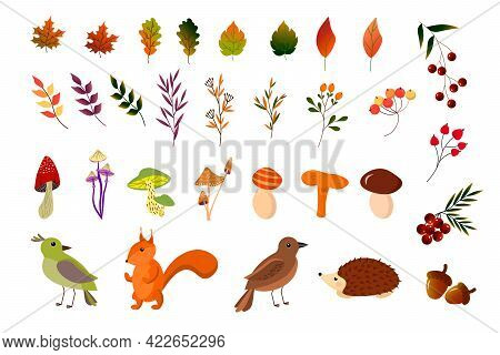 Set Of Multicolored Autumn Leaves And Berries, Squirrel, Hedgehog, And Bird. Autumn Illustration. Ve