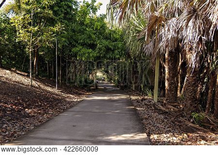 Mackay, Queensland, Australia - June 2021: Man And Woman Walking In The Botanic Gardens For Exercise