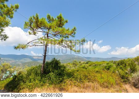 Coastal Landscape Of Corsica Island On A Sunny Summer Day. Pine Tree Grows On A Coast Of Cupabia Bea