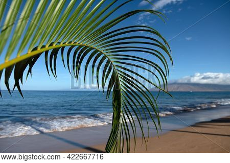 Tropical Beach Scene. Sea View From Summer Beach With Sky. Coastal Landscape. Green Leaves Of Palm T
