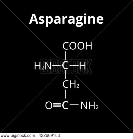 Asparagine Is An Amino Acid. Chemical Molecular Formula Asparagine Is Amino Acid. Illustration On Is