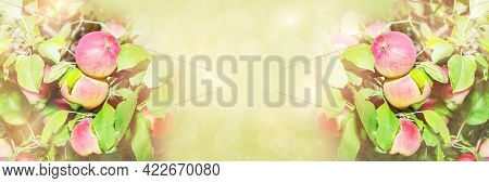 Ripe Red Apples On The Branches, Unfocused Green Widescreen Background. Art Design, Banner