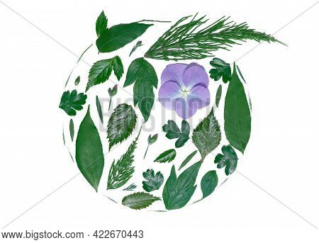 Spring Aesthetics. Natural Leaves Arranged In Circle Decorated With Purple Hydrangea Flower In A Cir