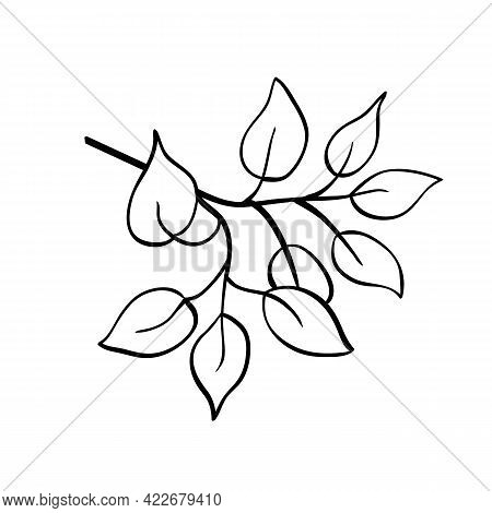 Vector Twig With Leaves Like Birch, Ficus Or Aspen, Outline Hand Drawn Sketch On White Background. M
