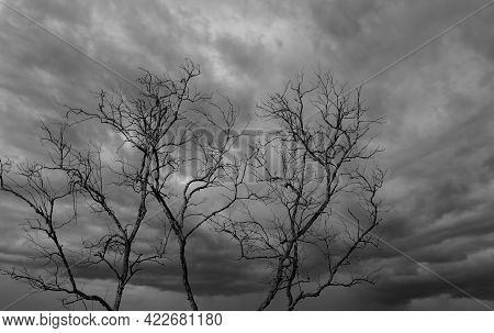 Silhouette Dead Tree On Dark Dramatic Sky And White Clouds Background For A Peaceful Death. Despair