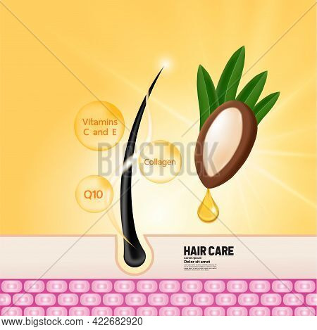 Argan Extract For Hair Product Vector Illustration.
