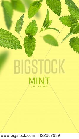 Fresh Flying Green Mint Leaves, Lemon Balm, Melissa, Peppermint Isolated On Yellow Background Flat L