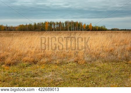 A Wild Meadow With Tall Grasses And A Autumn Forest In The Horizon