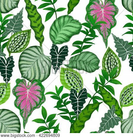 Illustration Of Tropical Plant Leaves Painting, Green Calathea And Monstera Leaf Exotic Drawing Seam