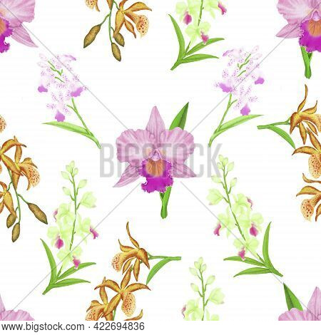 Pink Cattleya Orchid Flower Blossom Seamless Pattern On White Background Isolated And Clipping Path,