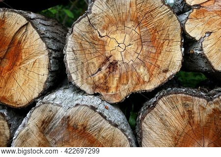 Natural Wood Background - Chopped Firewood Close-up. The Firewood Is Piled Up. Annual Rings On Tree