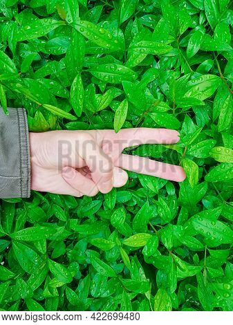 Victory In The Fight For The Preservation Of Nature And The Ecosystem Of The Planet. The Hand Shows