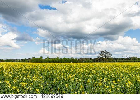 Field Of Bright Yellow Oil Seed Rape Plants Having A Tree, Forest And Hunting Tower At Horizon Durin