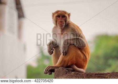 Monkey Sitting On The Wall ,funny Monkey