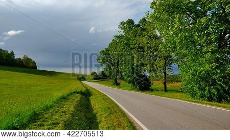 Road Going Through South Bohemian Countryside Around A Big Trees Lined By The Road. There Is A Grass