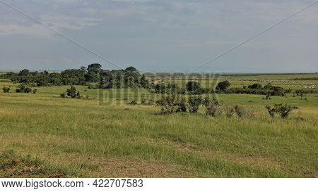 Landscape Of The African Savannah. Green Grass And Shrubs. A Dirt Road Is Visible In The Distance, A