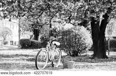 Nature Cycling Tour. Retro Bicycle With Picnic Basket. Bike Rental Shops Primarily Serve Typically T