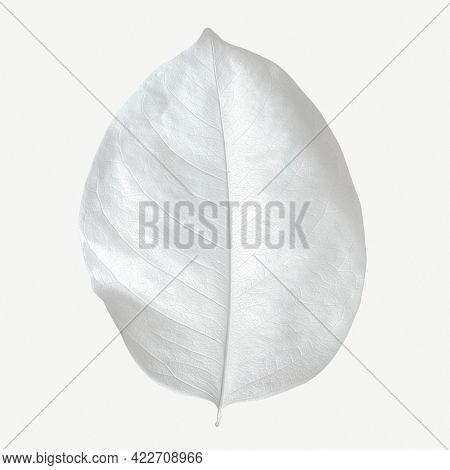 Dry bleached white leaf isolated on background mockup