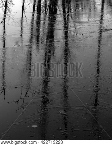 Leafless Tree Trunks Reflecting In The Water Surface Covered With Thin Ice. Black And White Abstract