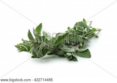 Fresh Oregano Herb Isolated On White Background