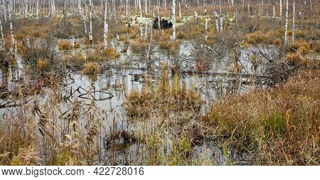 Autumn Swamp In The Forest In October