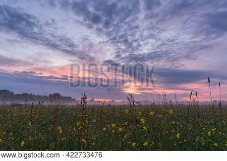 Idyllic Foggy Sunset Over A Meadow Full Of Flowering Buttercups (ranunculus Acris, Meadow Buttercup)