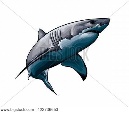 Great White Shark From A Splash Of Watercolor, Colored Drawing, Realistic. Vector Illustration Of Pa