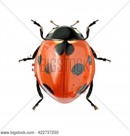 Ladybug From Splash Of Watercolors, Colored Drawing, Realistic. Vector Illustration Of Paints