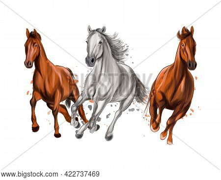 Three Horses Run Gallop From Splash Of Watercolors, Colored Drawing, Realistic. Vector Illustration