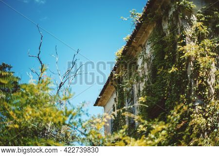 A Corner Of An Antique Desolate European House With A Dry Tree On The Left, With A Peeling Plaster F