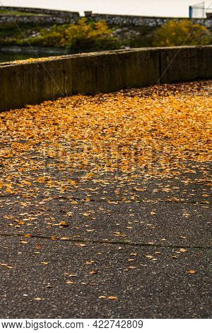 Beautiful Autumn Path On A Sunny Day. Autumn Season With Fallen Leaves In Autumn Colorful Park Alley